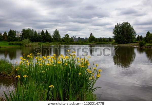 Yellow Flowers in front of a lake. Taken in Willband Creek Park, Abbotsford, British Columbia, Canada.