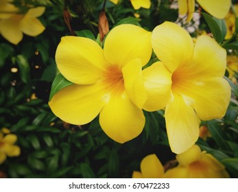 Yellow flowers in garden