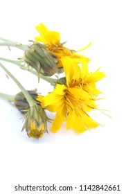 yellow flowers of goldenrod on white background