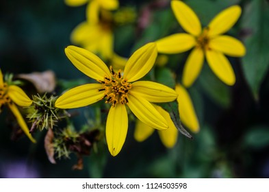 Yellow flowers in the green bluerred background