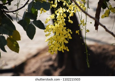 Yellow flowers with green leaves