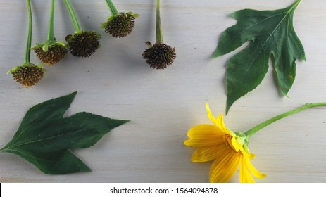 Yellow flowers with green leaves on a white wooden background