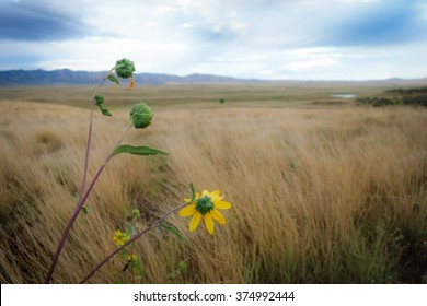 Yellow flowers in the highland of Prescott Valley, USA