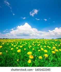 Yellow flowers hill under blue cloudy sky