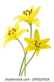 Yellow flowers isolated on a white background