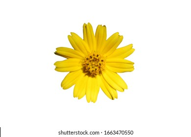 Yellow flowers isolated on white background.