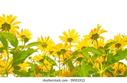 Yellow flowers - isolated over white