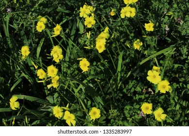 Yellow flowers in macro photograpy