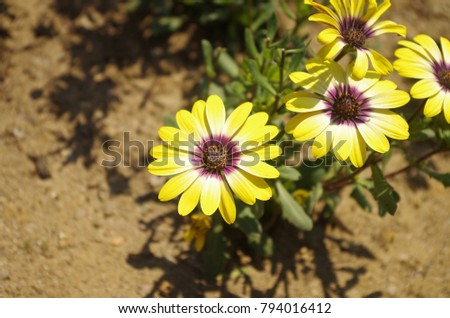 Yellow Flowers May Stock Photo Edit Now 794016412 Shutterstock