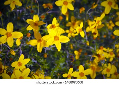 yellow flowers meadow nature summer blooming gold blossom