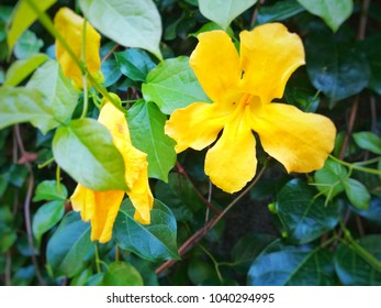 The yellow flowers are in the middle, the sides are flowers that are not blooming in the back, the bushes are green and slightly blurred.