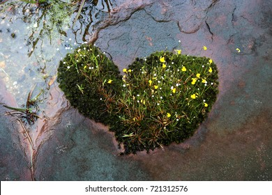 Yellow flowers and moss look like heart growing on the rock.