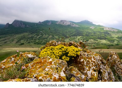 with yellow flowers and mountains in the background