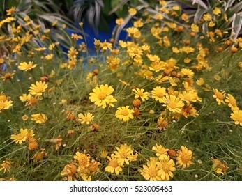 yellow flowers nobody