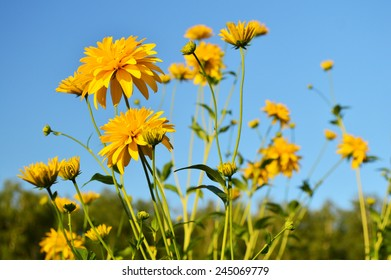 Yellow flowers on the background of bright blue sky in the evening.