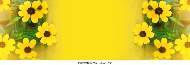 Yellow flowers on a yellow background for skinali. Panorama, horizontal.