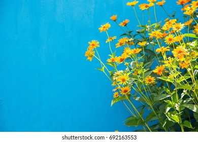 Yellow flowers on a blue background