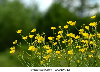 yellow flowers on a forest background