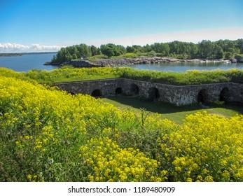 Yellow Flowers on the fortress Suomenlinna in Helsinki
