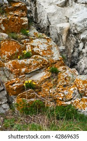 yellow flowers on grey rock in summer time