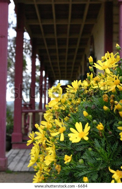 yellow flowers on long wooden porch