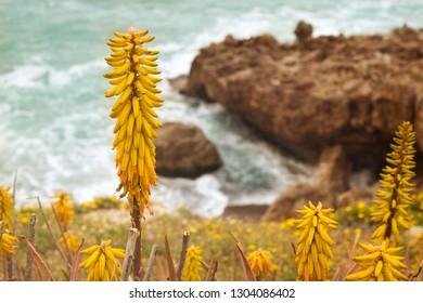 Yellow Flower Mediterranean Flower Images Stock Photos Vectors