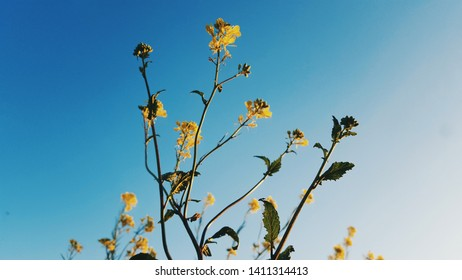 yellow flowers on sky background