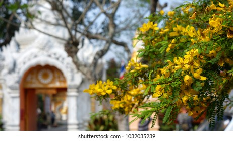 Yellow flowers on tree branches.