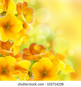 Yellow flowers images stock photos vectors shutterstock yellow flowers on a white background a spring primrose mightylinksfo