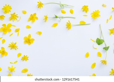 yellow flowers on white background