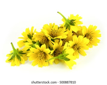 Yellow flowers on a white background.