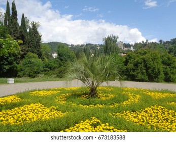 Yellow flowers and palm tree in flowerbed in city park, green trees around