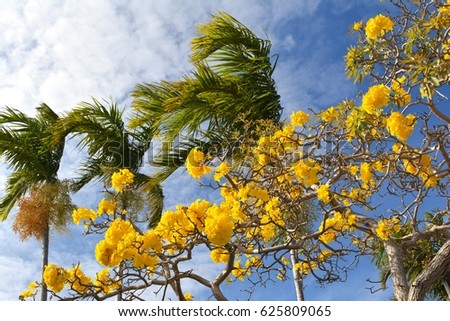 Yellow flowers palm trees against blue stock photo edit now yellow flowers and palm trees against a blue sky mightylinksfo