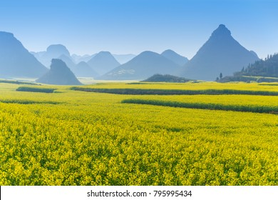 The Yellow Flowers of Rapeseed fields with blue sky at Luoping, small county in eastern Yunnan, China