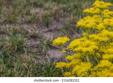 yellow flowers to the right of the image