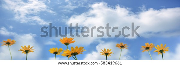 Yellow flowers ( Rudbeckia) against blue sky with clouds, banner