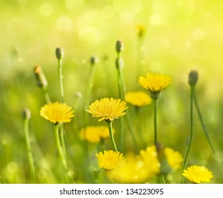 yellow flowers, shallow deep of field