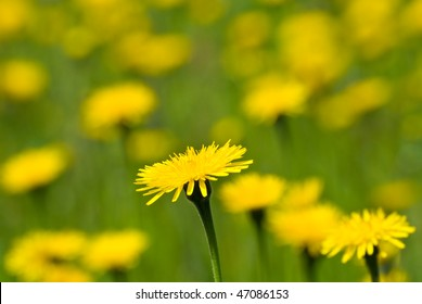 Yellow flowers (shallow depth of field)