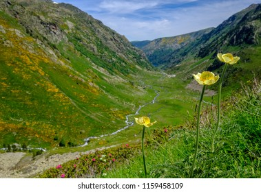 Yellow flowers with small valley in background in the french Pyrenees mountains, near Aston in Ariege