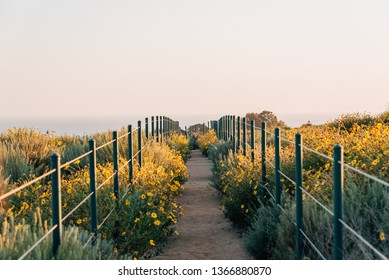 Yellow flowers and trail at Hilltop Park, Dana Point, Orange County, California