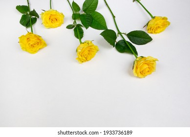 yellow flowers tulips and roses on a white background