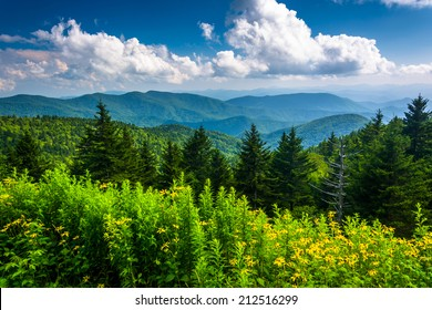 Yellow flowers and view of the Appalachian Mountains from the Blue Ridge Parkway in North Carolina.
