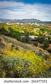 Yellow flowers and view of distant mountains and Riverside, from Mount Rubidoux Park, in Riverside, California.