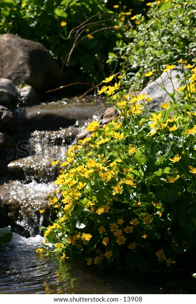 yellow flowers and waterfall