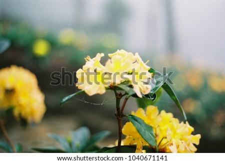 Yellow Flowers Winter Stock Photo Edit Now 1040671141 Shutterstock