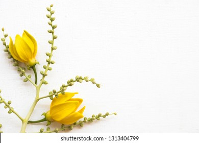 yellow flowers ylang ylang local flora of asia decoration flat lay style on background white wooden