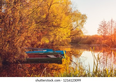 Yellow foliage on the trees in the fall on the river during sunset with views of the boats of fishermen near the riverbank