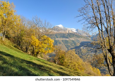 Yellow foliage of tree in landscape of mountain in autumn