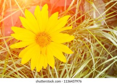 yellow fower background