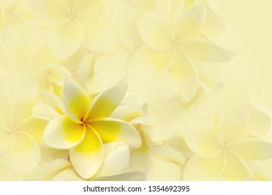 Yellow frangipani flower arrangement on blurred background.